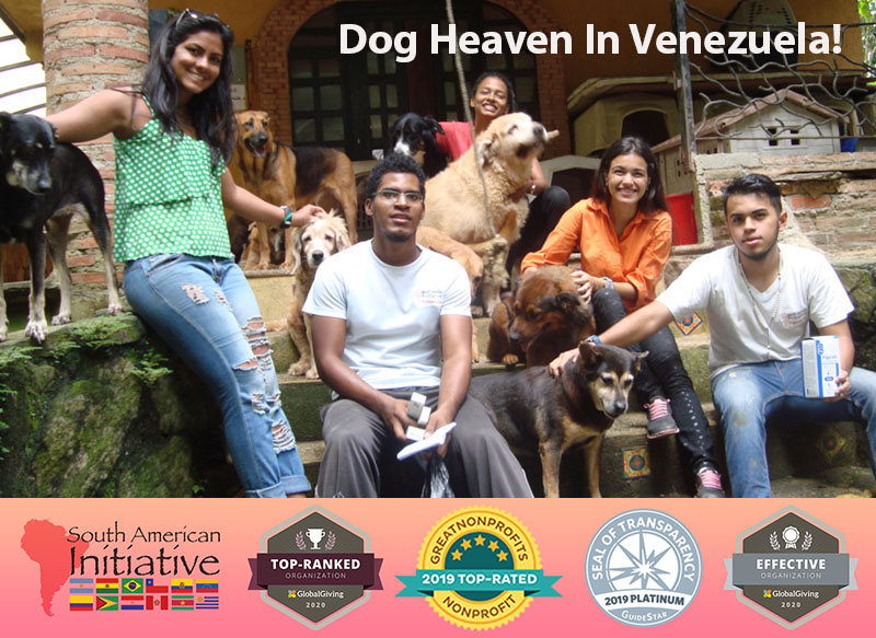 Help Abandoned Venezuelan Pets | Providing Food and Care